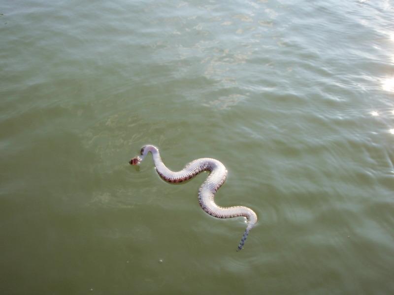 Snake Bait